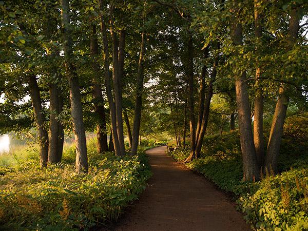 ChicagoBotanic-Garden-1-courtesyChicagoBotanicGarden.jpg