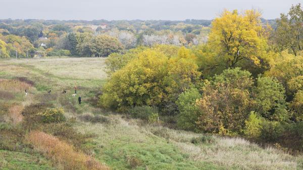 EDaniel_Edge of Woods.jpg