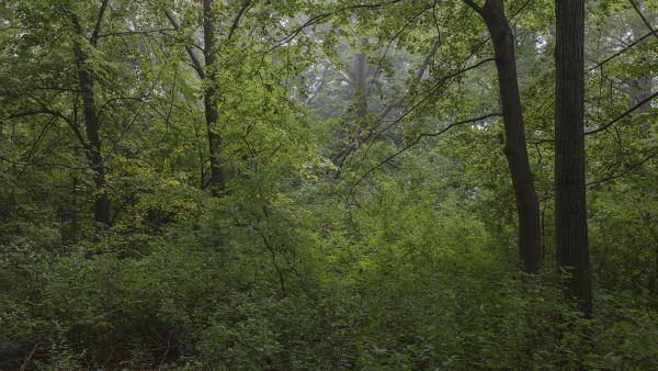 EDaniel_Wilderness.jpg