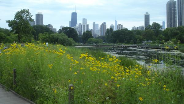IL_Chicago_LincolnParkZoo_signature_AlanWatkins_2015_02.jpg