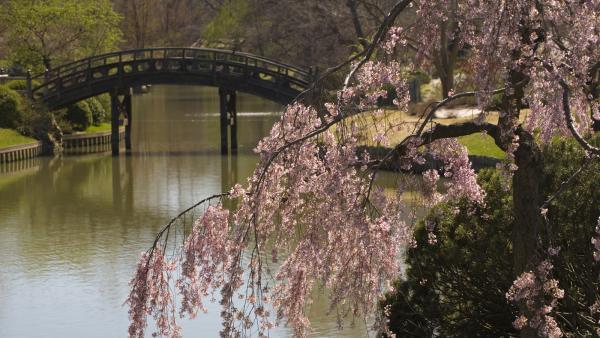 missouribotanicalgarden japanesegarden_signature_mbg_2005_01jpg japanese garden