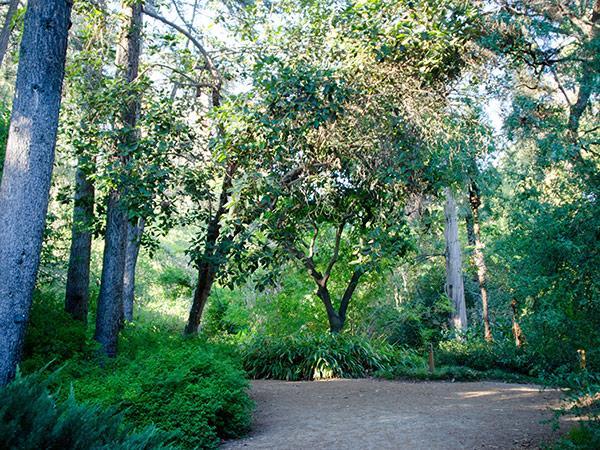 Mildred-E-Mathias-Botanical-Garden--Matthew_Traucht2014-3.jpg