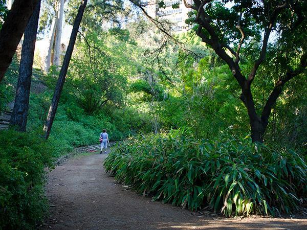 Mildred-E-Mathias-Botanical-Garden--Matthew_Traucht2014-4.jpg