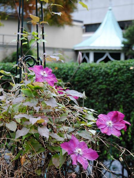 Prouty-Garden4_KatieCharbonneau_2011.jpg