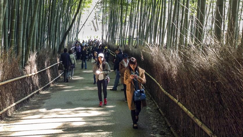 Japan_bamboo.jpg