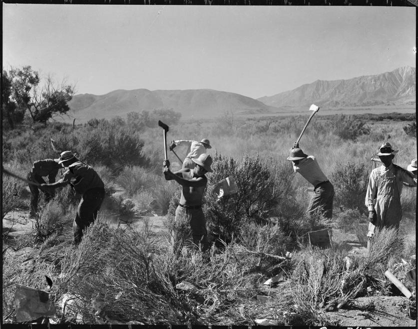 JapaneseInternmentCamp_working_DorotheaLange_feature.jpg