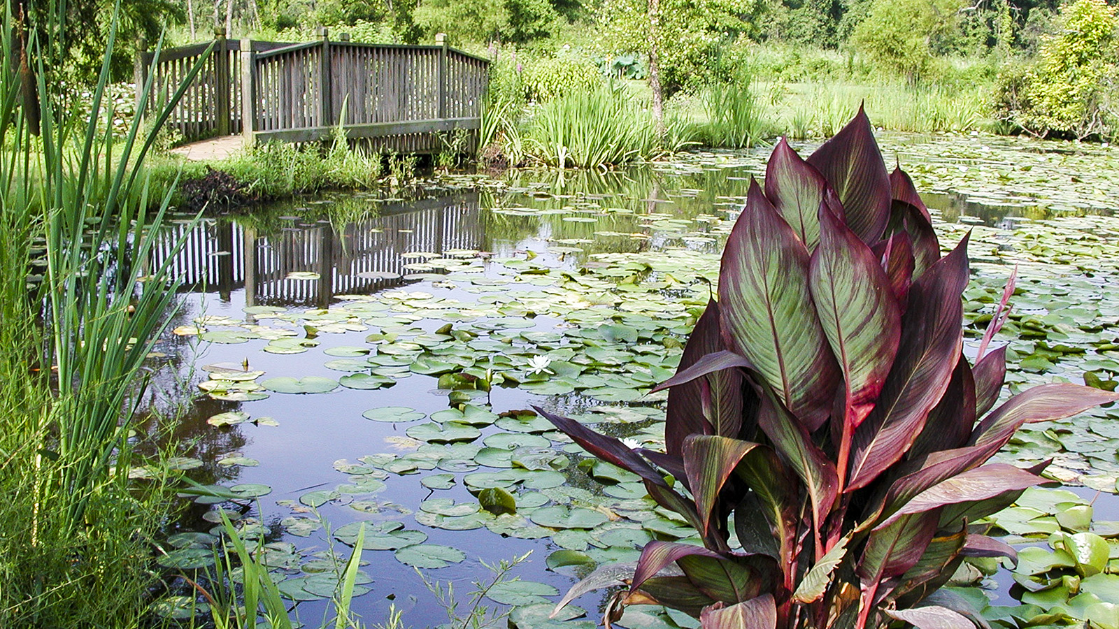 Kenilworth Aquatic Gardens The Cultural Landscape Foundation