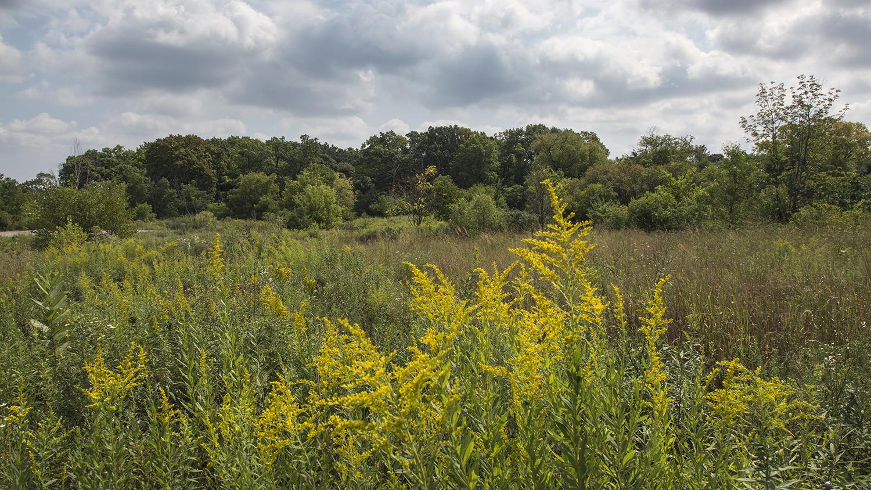 4 EDaniel_Meadow & Woods.jpg