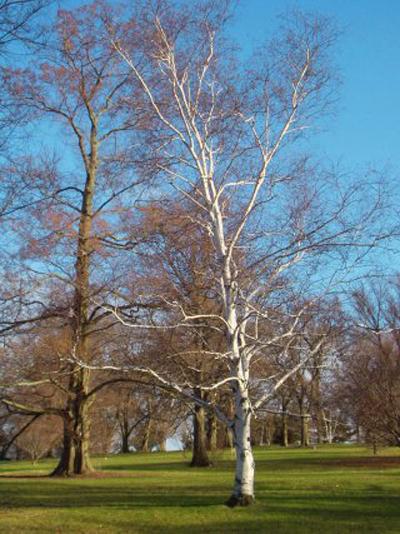 Arnold Arboretum_03