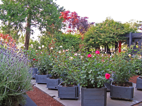 Royston Garden_07