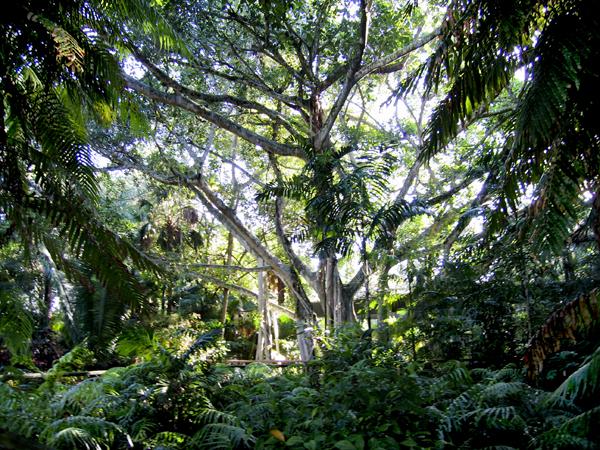 Caribbean Gardens_01