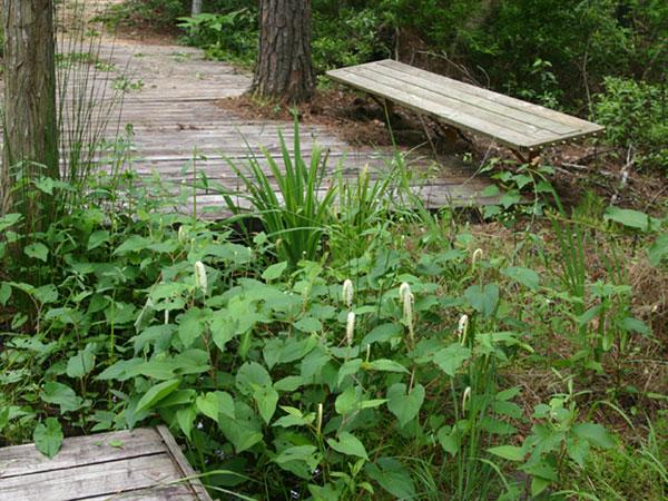 Crosby Arboretum_03