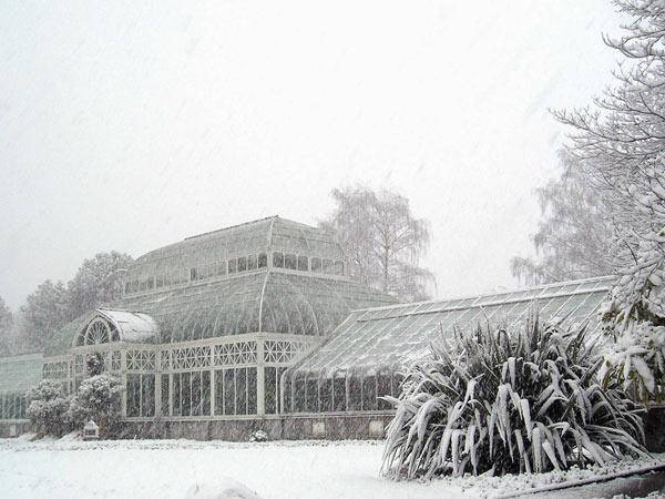 Volunteer Park Conservatory_03