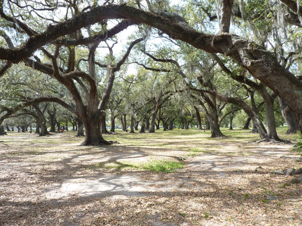 New Orleans City Park_05