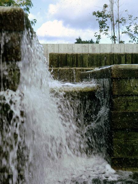 Water Garden_08