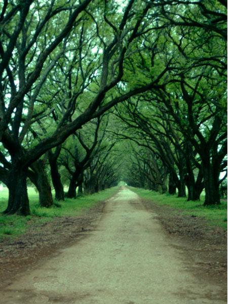 Evergreen Plantation_03