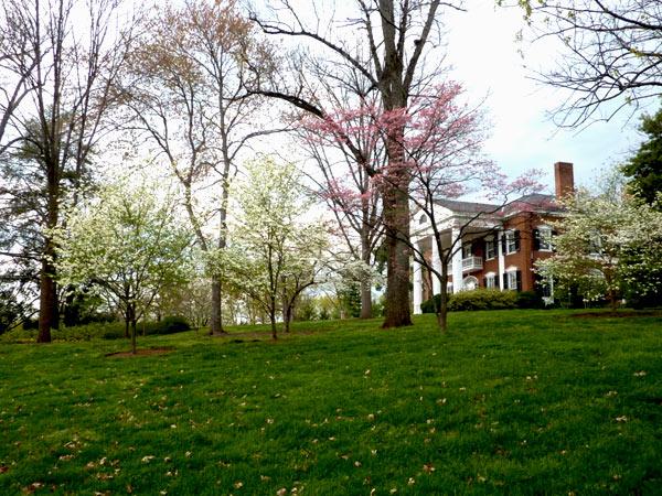 University of Virginia_06