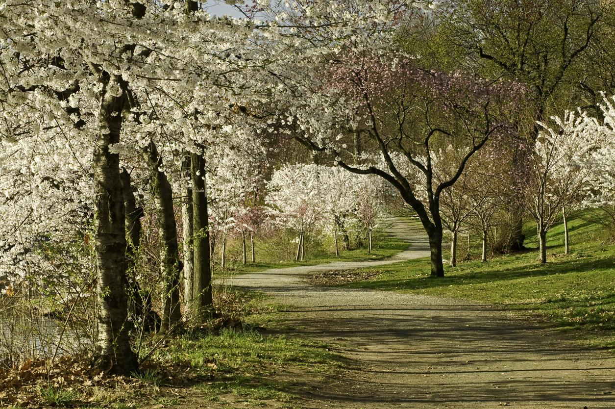 Branch Brook Park_05