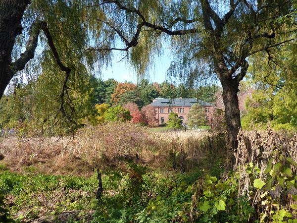 Arnold Arboretum_01