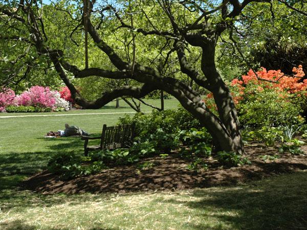 Azalea Garden_Fairmount Park_03