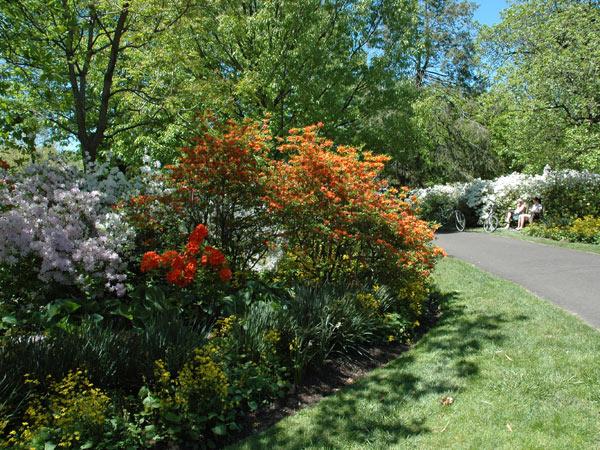 Azalea Garden_Fairmount Park_02