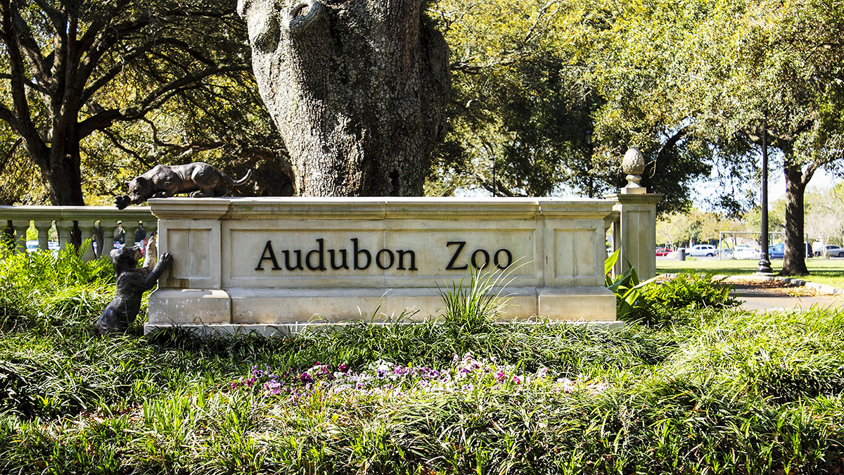 AudubonZoo_feature_2011_KyleJacobson-PeterSummerlin_003.jpg