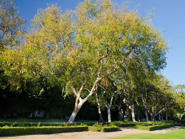 CA-Beverly_Gardens_Park-Matthew_Traucht2014-11.jpg