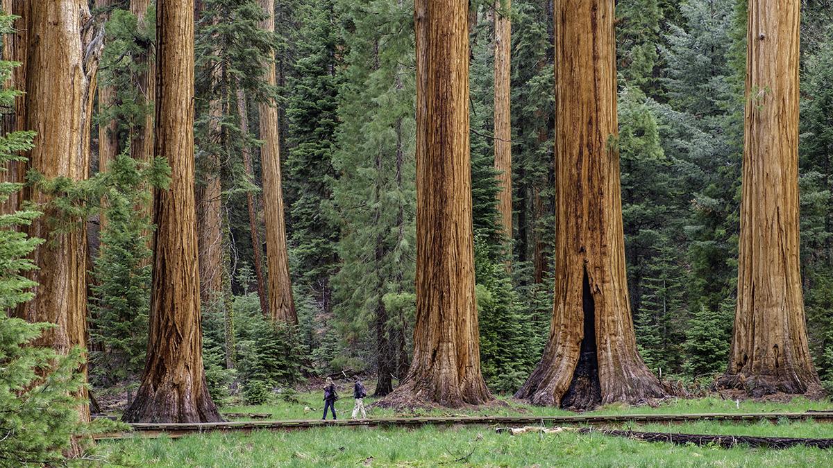 CA_SierraNevadaMountainRange_SequoiaNationalPark_byJonathanIrish-courtesySaveTheRedwoodsLeague-courtesyTCLF_2016_001_sig_2.jpg