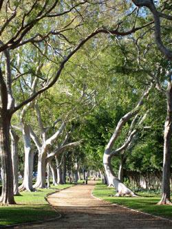 Cornell-beverly-gardens-LarkinO.jpg