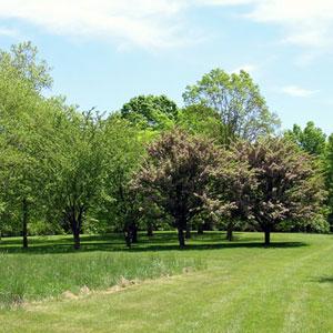 Hilltop-Arboretum_Sig.jpg