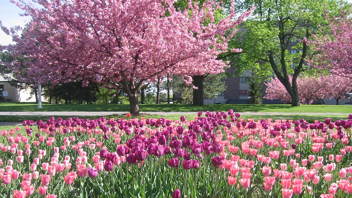 NY_Rochester_HighlandPark_byTobin_2006_001_sig_005.jpg