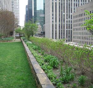 Rockefeller-Center-2007.jpg