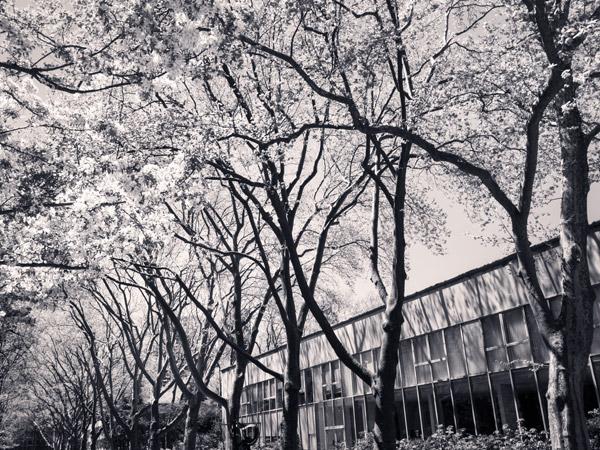 RockefellerUniversity7_CopyrightBenjaminDimmitt2013.jpg