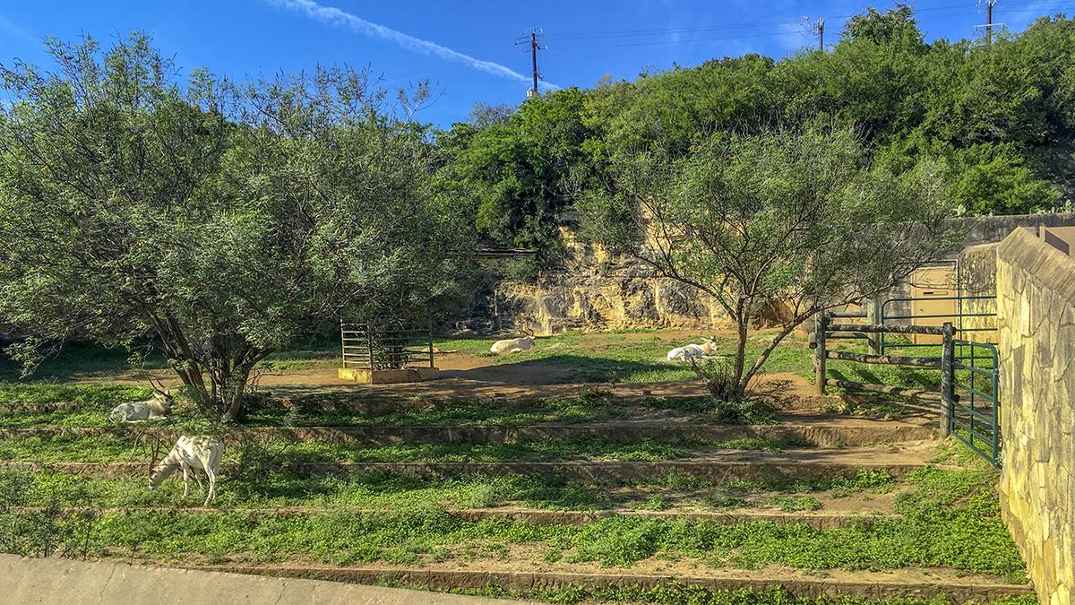 San Antonio Zoo   The Cultural Landscape Foundation