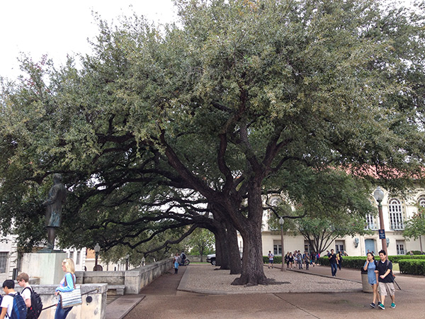 University-of-Texas-Austin2_CharlesBirnbaum2013.jpg